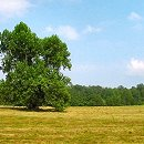 north carolina land for sale